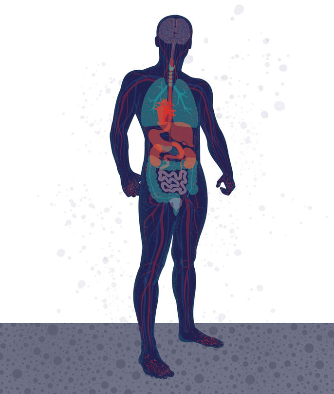 Illustration of a body and its organs