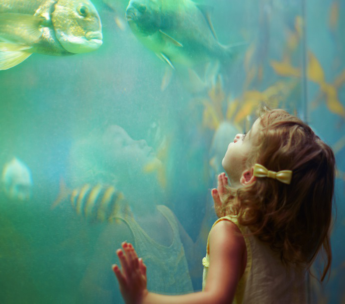 Child looking at fish in an aquarium